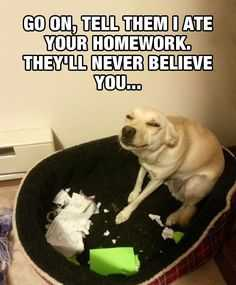 Funny Lol Picture - Dog Ate Homework