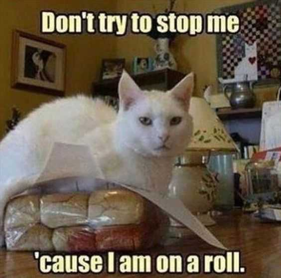 24 Hilarious Animal Pictures with Captions - on a roll