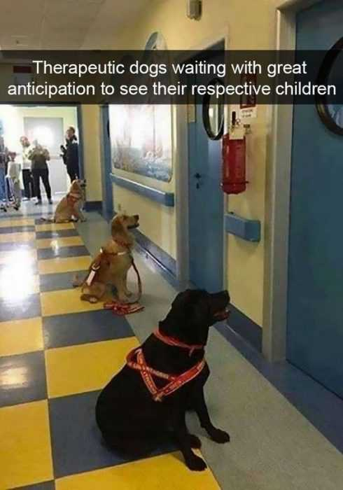 Hilarious Funny Pictures - Well Trained Pooches