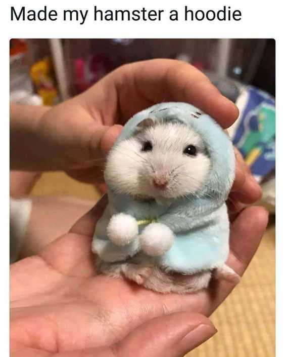 sweet funny animal pictures - hamster hoodie