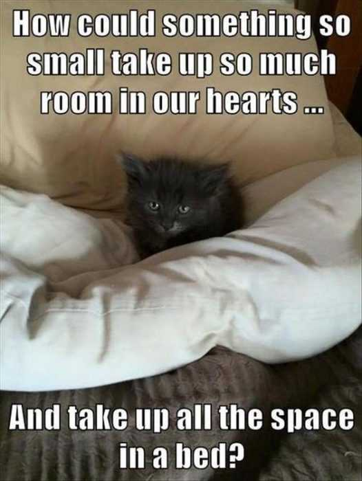 sweet funny animal pictures - space hog