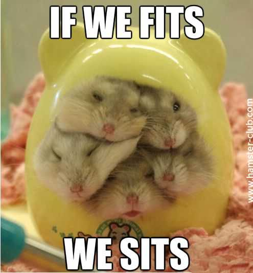 sweet funny animal pictures - sit