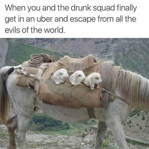 Hilarious Funny Images - Drunken Sheep