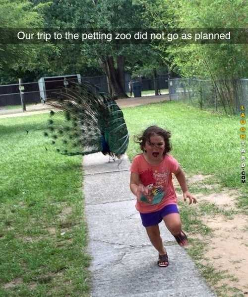 Hilarious Funny Images - Don't Pet The Peacock