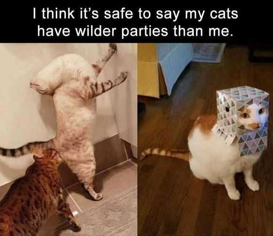 Hilarious Funny Images - Cat Party