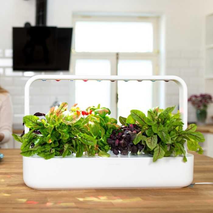 Smart Planter For Your Own Indoor Herb Garden
