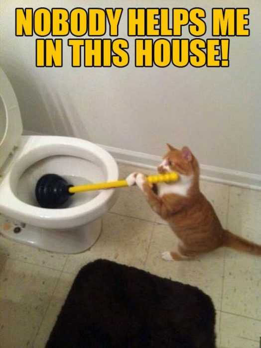 24 Funny Pictures about Spring Cleaning - cat plunger