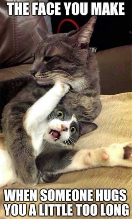 33 Amazing Funny Animal Pics