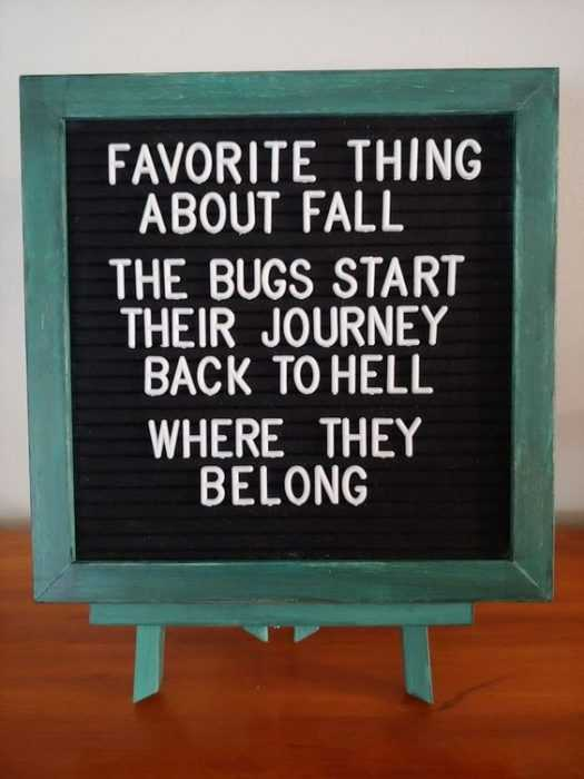 Funny Letter Board Quotes - Fall Love