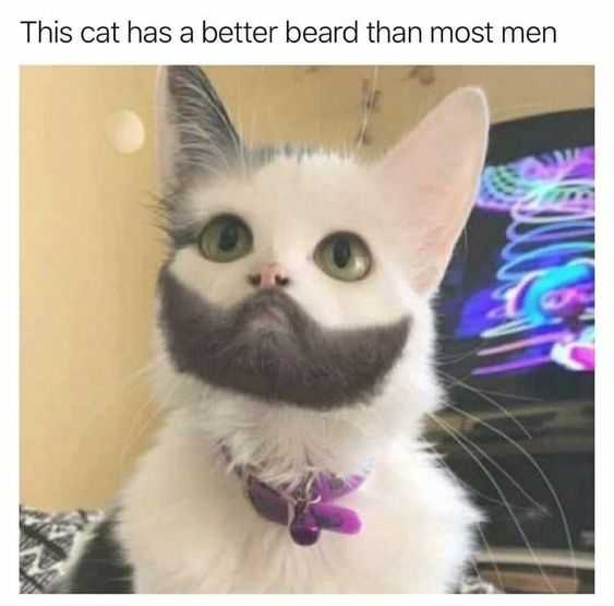 27 Funny Cat And Dog Memes That Are Just Purrfection