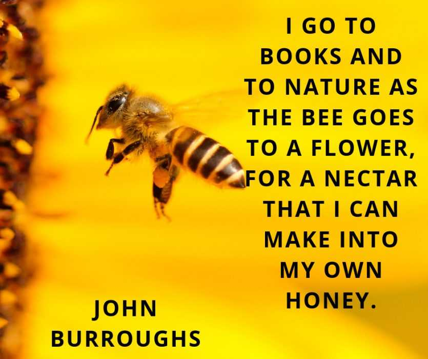 Quotes about nature's gifts
