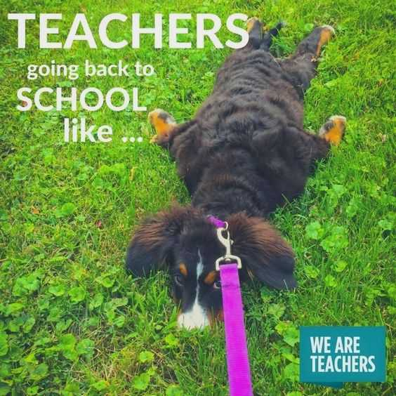meme of dog lying in grass with leash pulled taught captioned teachers going back to school like...