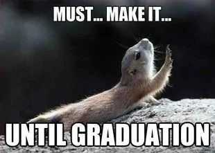 funny student meme featuring a chipmunk crawling helplessly captioned must...make it... until graduation