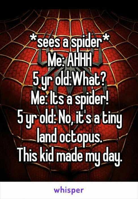 whisper spider octopus