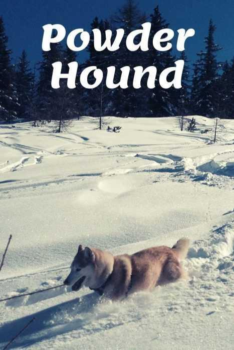 husky shredding pow