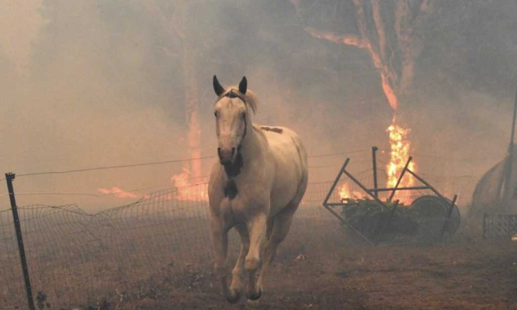 a horse running away from raging wildfires which consumed its stable