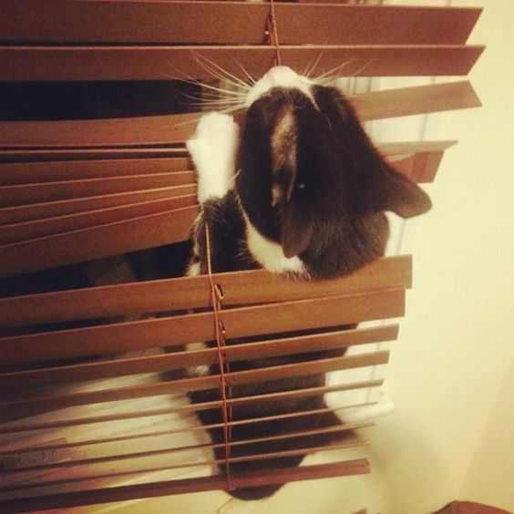 35 Funny Pictures Of Cats Stuck In Places They Shouldn T Be