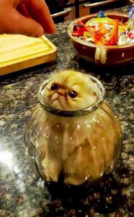 cat-sunken-jar.jpg