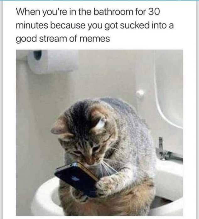 funny cat pictures - cat on phone meme