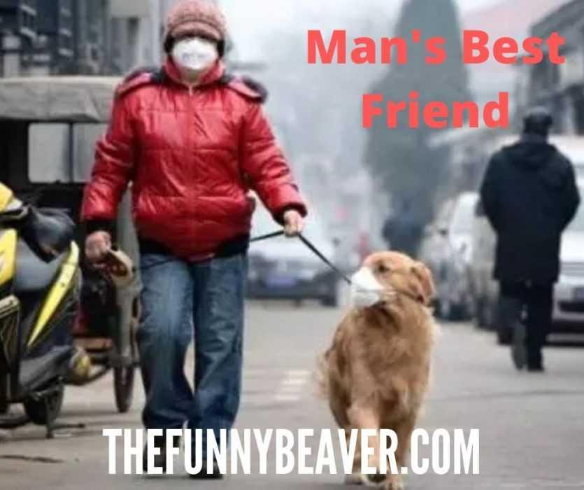funny corona virus memes - man's best friend meme