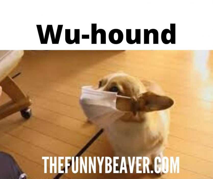 funny corona virus memes - the wu-hound meme