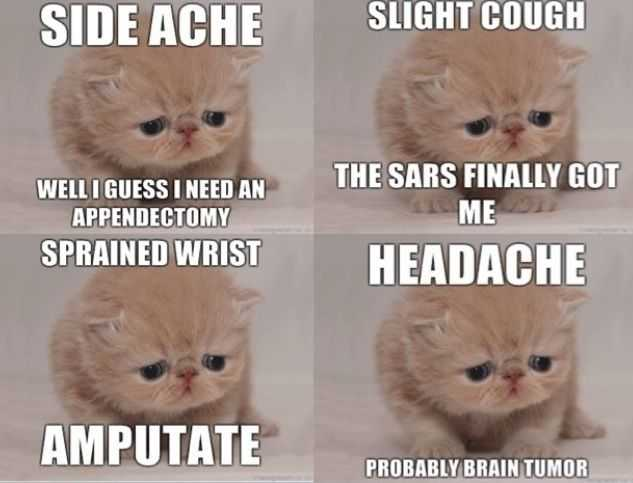funny cat pictures - cat emotion to health issues meme