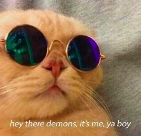 funny cat pictures - john elton cat