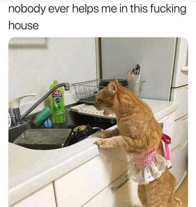 funny cat pictures - cat in apron in front of sink