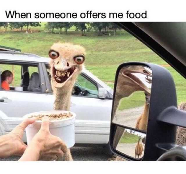 50 Funny Memes For Anyone Who Loves Food Eating And Dreaming