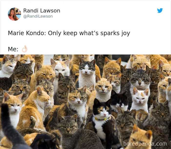 funny cat pictures - cat sparking joy meme