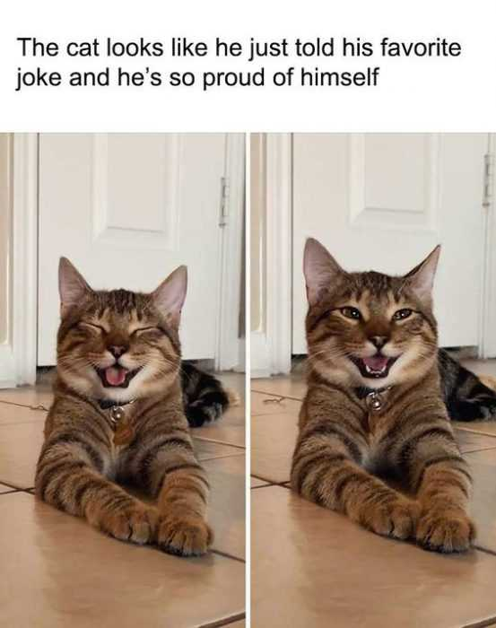 funny cat pictures - proud cat
