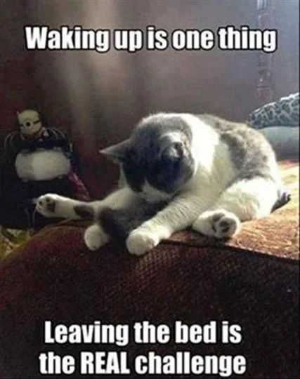 funny cat pictures - cat not getting out of bed