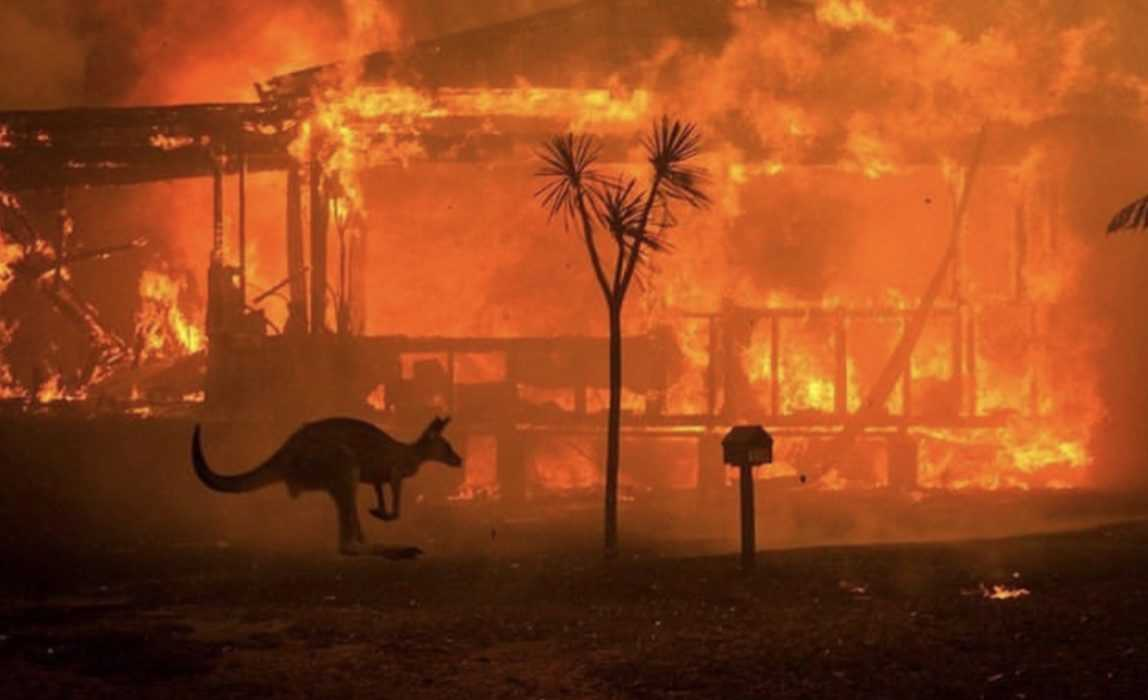 kangaroo stops to observe raging wildfires consume a farmhouse