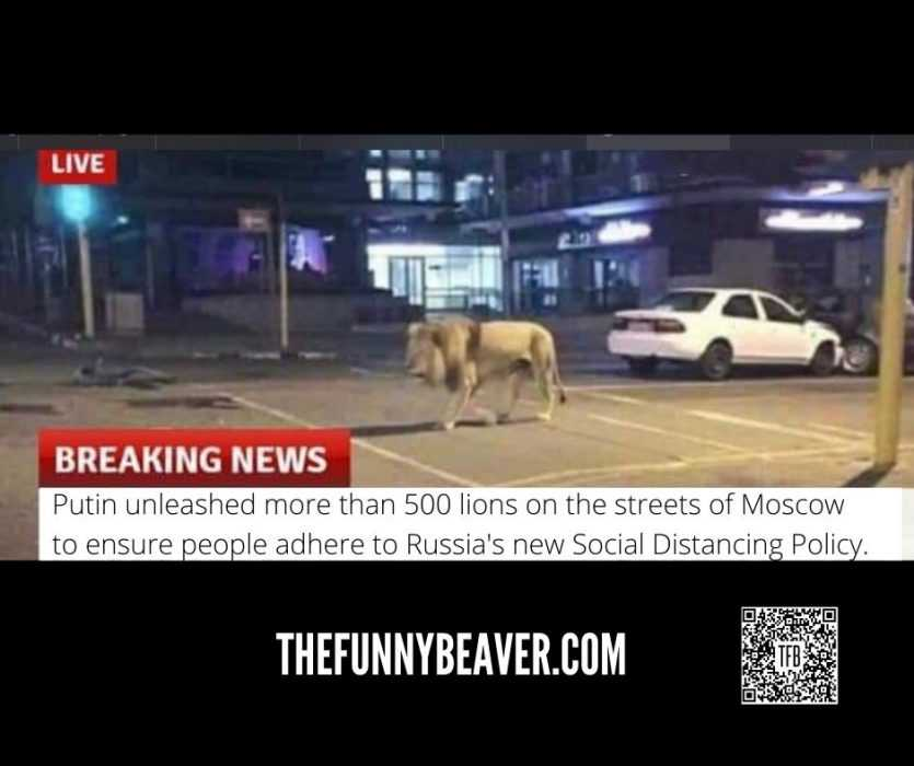 Coronavirus Meme Featuring A Lion On The Streets Of Moscow To Enforce Curfew
