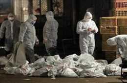 volunteers prepare for a pandemic