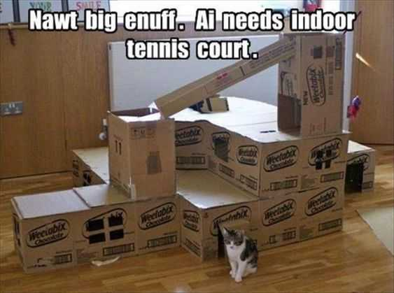 27 Hilarious Cute Animal Pictures - cat palace