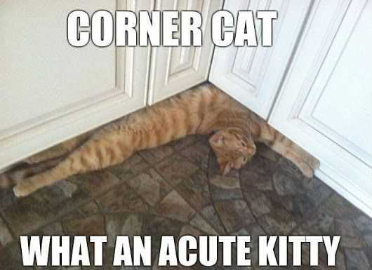 27 Hilarious Cute Animal Pictures - acute kitty