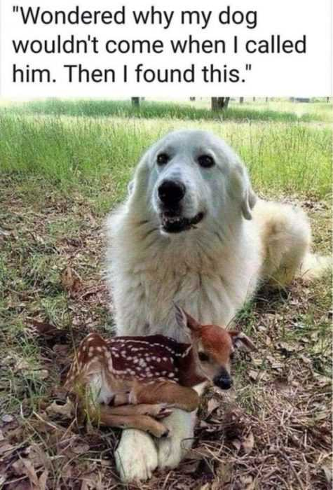 27 Hilarious Cute Animal Pictures - doggy toy deer