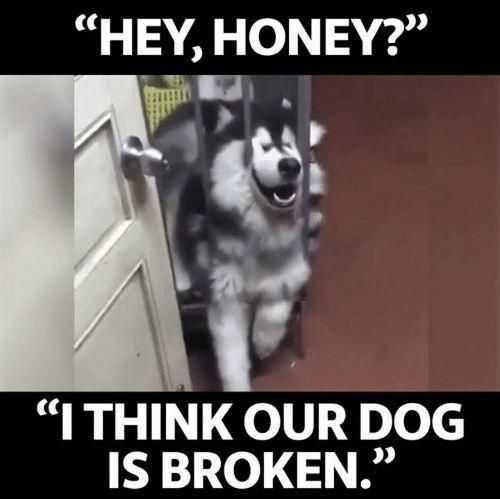 27 Hilarious Cute Animal Pictures - broken dog