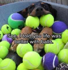 27 Hilarious Cute Animal Pictures - balls