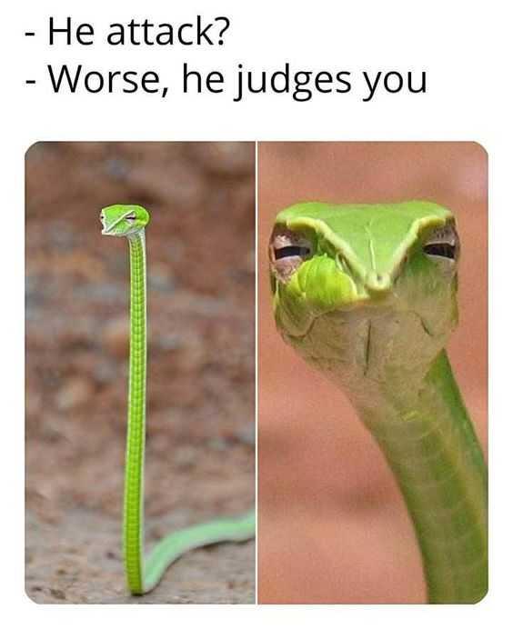 27 Hilarious Cute Animal Pictures - judgemental snake
