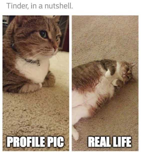 27 Hilarious Cute Animal Pictures - tinder cat