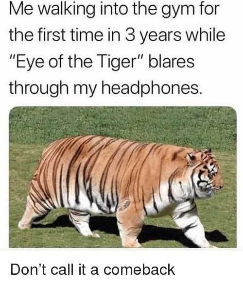 27 Hilarious Cute Animal Pictures - your inner tiger