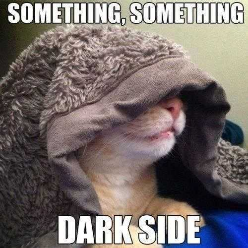 27 Hilarious Cute Animal Pictures - cat's dark side