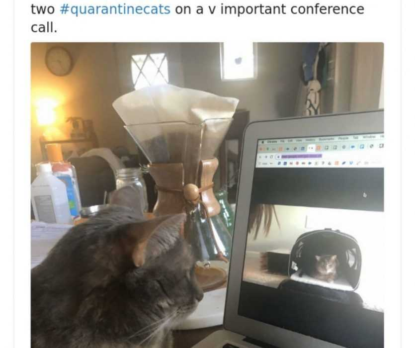 quarantine cat memes - cats facetiming