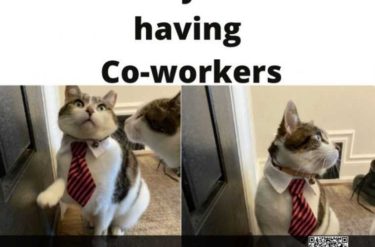 quarantine cat memes - owner misses coworkers
