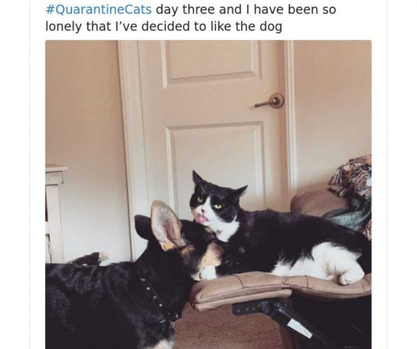 quarantine cat memes - cat loves dog in quarantine