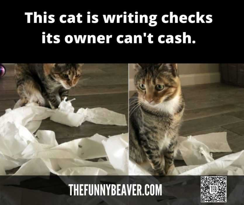 quarantine cat memes - cat writing checks