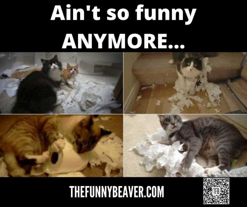 quarantine cat memes - aint funny no more