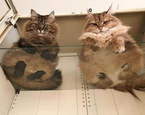 Photos of Cats on Glass Tables - A pair of judgey kitties
